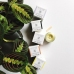 Кремовый дезодорант Грейпфрут/Лимон, Little Seed Farm