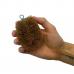 Мини кокосовая щетка для уборки Loof Co